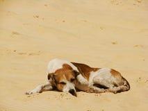Street Dog 02 Stock Image