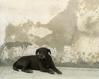 Street Dog. Black dog in the street in Mexico stock images