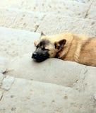 Street Dog. A street dog in Chongqing, China Stock Photos