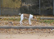 Abandoned street dog. Street dog abandoned victim of animal abuse Royalty Free Stock Images