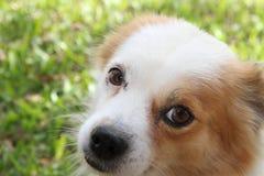 Abandoned street dog. Street dog abandoned victim of animal abuse Royalty Free Stock Image