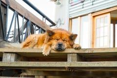 Street dog Stock Photography
