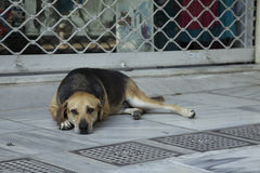 Street Dog in Athens. Dog on the street of athens taking a rest Stock Photos