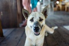 Street dog at cafe in Bali.  Royalty Free Stock Photos