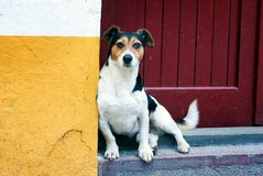 Street Dog Chilling on the Stairs. And looking directly into camera Stock Image