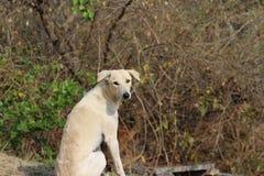 Street dog. Cute white Street dog pose Royalty Free Stock Image