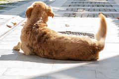 Street Dog is Feeling Excited, Moving Tail. Street Dog is Feeling Excited, and he is moving his Tail quickly royalty free stock photos
