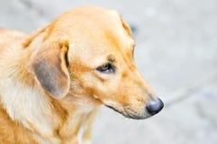 Street dog on the floor Stock Photo