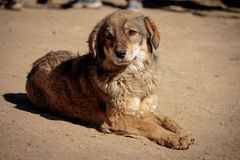 Street dog full picture. A street dog sitting in sunlight on dusty road at shimla, himachal pradesh, india Stock Photos