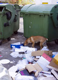 Street dog with garbage near green trash dumpsters Royalty Free Stock Photos