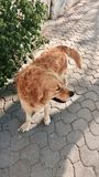 Street dog. Good looking street dog Royalty Free Stock Photography
