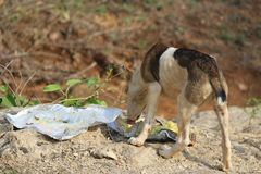 Street dog. A hungry cute little Street dog Royalty Free Stock Photo