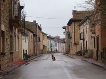 Street and Dog Stock Photography