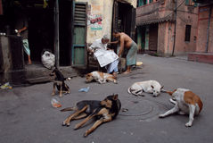 Street Dog in Kolkata Stock Photography