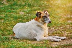 Street Dog on the Ground Stock Photo