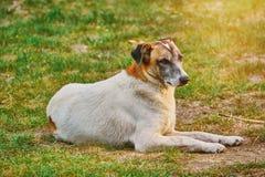 Street Dog on the Ground. Street Dog Lies on the Ground Stock Photo