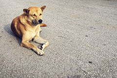 Street Dog Mammal Road Concept Stock Image
