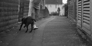 Street Dog. A man tries unsuccessfully to stop a dog from running towards an oncoming figure in the background Royalty Free Stock Images