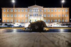 Street dog near Greek Parliament Royalty Free Stock Image
