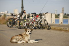 Stray dog and bicycles
