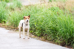 Street dog Stock Images