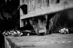 Street Dog. Picture of the street Dog Royalty Free Stock Photo