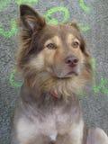 Street dog portrait Stock Photography