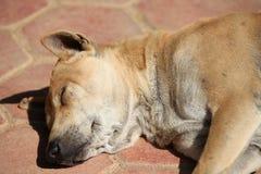 Street dog resting in the sun, Thailand Stock Photos
