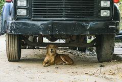 Street dog resting. A street dog resting under a truck in a dirt road Stock Images