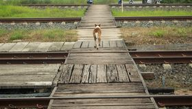 Street dog runing over bridge at the train station. Street dog runing over bridge Stock Photos