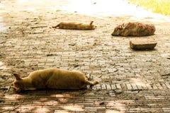 Street Dog. It's Street dog, Slay Dog royalty free stock photos