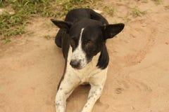 Street Dog. It& x27;s a Street dog,Slay Dog stock image