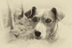 Street dog. Sad street dog with cute adorable eyes outside Stock Photography