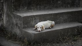 Street dog on the stairs stock photos
