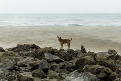 Street dog/ Stray dog sitting on the beach. In thailand stock photo