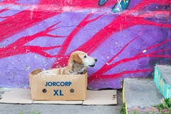 Street dog and street art Royalty Free Stock Photos