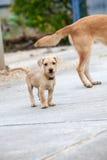 Street dog Royalty Free Stock Image