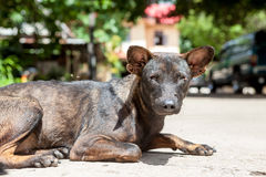 An street dog Stock Images