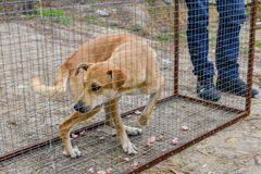 Street dog in transport cage. Royalty Free Stock Photos