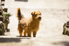 Street dog waiting for a person. Stock Photography