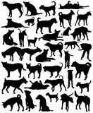 Street dogs. Collection of editable vector silhouettes of a motley group of Bangkok street dogs Stock Photography