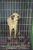 Street dogs in dog shelter waiting stock photography