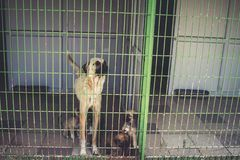 Street dogs in dog shelter waiting royalty free stock images