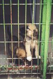 Street dogs in dog shelter waiting royalty free stock photo