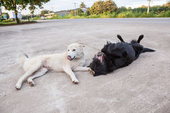 Street dogs Royalty Free Stock Images