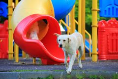 Street dogs stray dog playing in the park stock photo