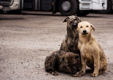 Street dogs Stock Photography