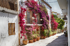 Bougainvillea on a wall. A street on Eivissa with a bougainvillea and lamp in Ibiza, Spain Stock Photography