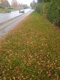 A street in the Fall, in Aarhus Denmark. A long lonely Royalty Free Stock Photography