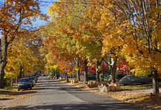 Street with fall colors Stock Image
